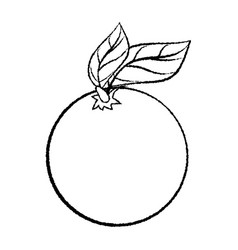 line drawing of orange with leave -simple line vector image