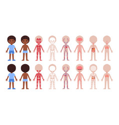 Set cartoon human body system front back view vector