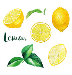 yellow lemon fruits and leaves watercolor fruit vector image