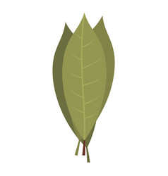Bay laurel leaves icon isolated vector