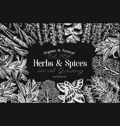 culinary herbs and spices banner template vector image