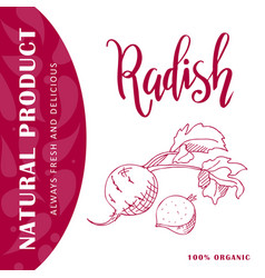 vegetable element of radish hand drawn vector image