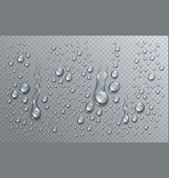water rain drops or condensation in shower vector image