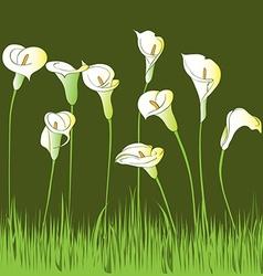 calla garden vector image vector image