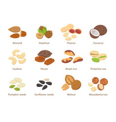 nuts and seeds in flat design set of vector image