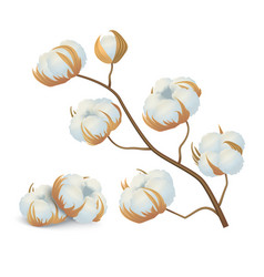 realistic detailed 3d cotton flowers branch vector image