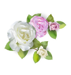 rose bouquet white and pink vector image