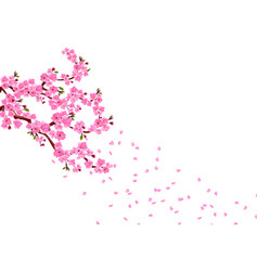 sakura branches with pink flowers leaves and vector image
