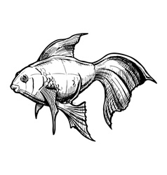 Sketch of gold fish vector
