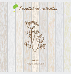 anise essential oil label aromatic plant vector image