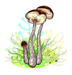 Brown-cap bolete mushroom vector