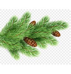 Fir tree branch realistic christmas vector
