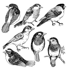 Graphic set of hand drawn birds on white vector