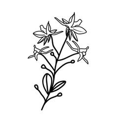 larkspur floral hand drawn design sign vector image