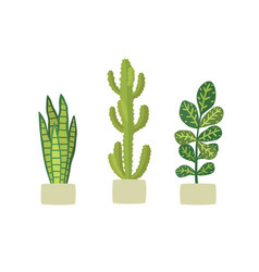 potted plants in pots cactus euphorbia codiaeum vector image