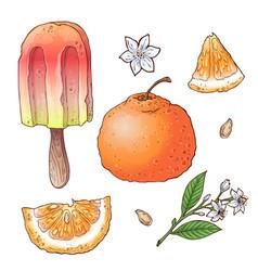set of citrus ice cream vector image