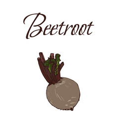 tasty veggies beetroot vector image