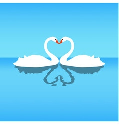 two lovers swans Blue background vector image