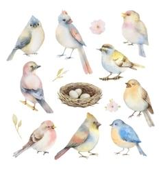 watercolor set birds vector image
