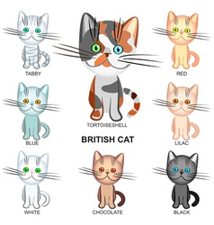 shorthair cats vector image vector image