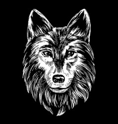 muzzle a wolf wildlife hand drawn vector image