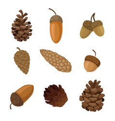Set acorns and cones on vector