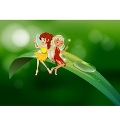 Two fairies sitting on an elongated leaf vector