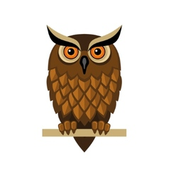 Owl Isolated on White vector image vector image