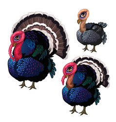 group of three turkeys of different ages vector image