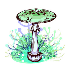 Destroying angel mushroom vector