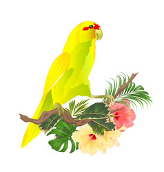 Indian ringneck parrot in yellow on branch vector