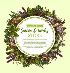 Sketch poster for spices and herbs store vector