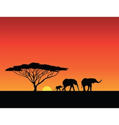 elephants silhouettes sunset vector image