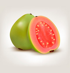 Fresh green guava fruit vector