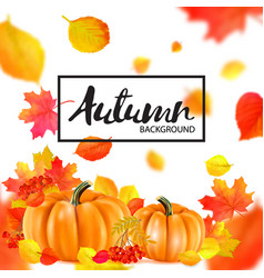 background orange autumn pumpkins vector image