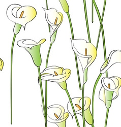 Calla pattern vector