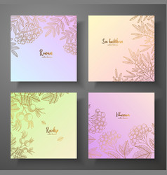 Collection of square gold cards with berries vector