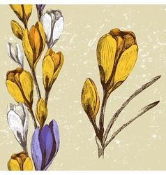 Crocus flower vector