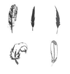 Feather bird print design graphic black vector