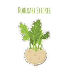 Green kohlrabi sticker cabbage fresh organic vector