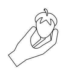 hand holding fresh strawberry vector image