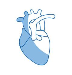 Human heart anatomy cardiology healthcare symbol vector