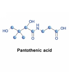 Pantothenic acid vitamin B5 vector