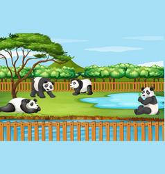 Scene with panda in zoo vector