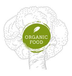 Label broccoli fresh natural eco food hand drawn vector