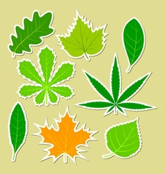 Leaves of different plants vector image vector image