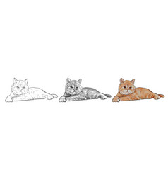 Adorable lying persian cat isolated on white vector