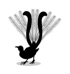 Lyrebird bird black silhouette animal vector