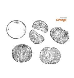 set of orange hand draw sketch vector image