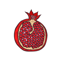 pomegranate fruit berry with flower and leafs vector image